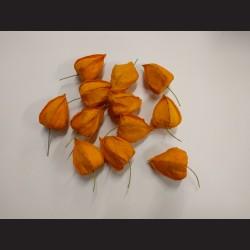 Dyně-tykev zápich 6ks