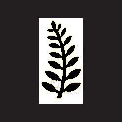 Raznice - kapradina, 5 cm