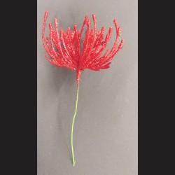 Květ zápich červená