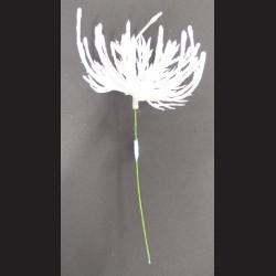 Květ zápich bílá