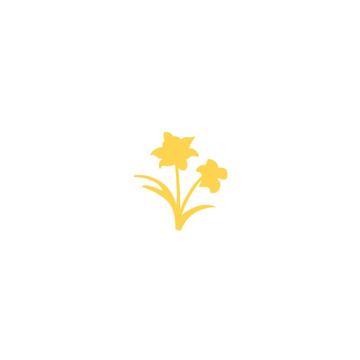 Raznice - narcis, 2,5 cm