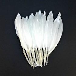 Dekorativní peří, krátké - bílé, 24 ks