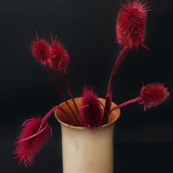 Podzimní dekorace - bodlák červený