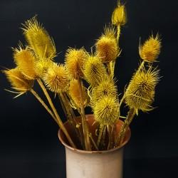 Podzimní dekorace - bodlák žlutý