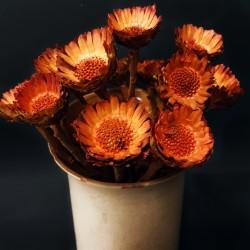 Podzimní dekorace - sušená květina oranžová