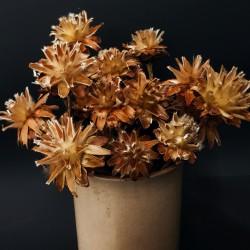 Podzimní dekorace - sušený květ