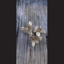 Květ zápich - vánoční hvězda zlatá glitrová
