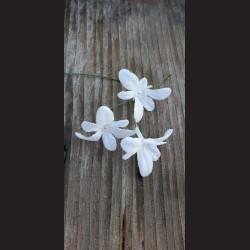 Květ zápich - vánoční hvězda bílá glitrová