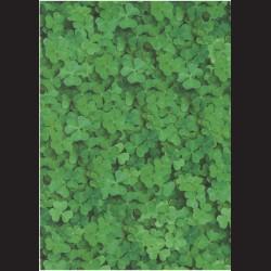 Fotokarton A4 Čtyřlístky